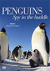 Penguins – Spy in the Huddle